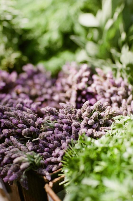 fresh_lavender