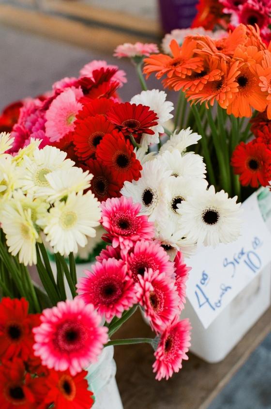 gerber_daisies_farmers_market