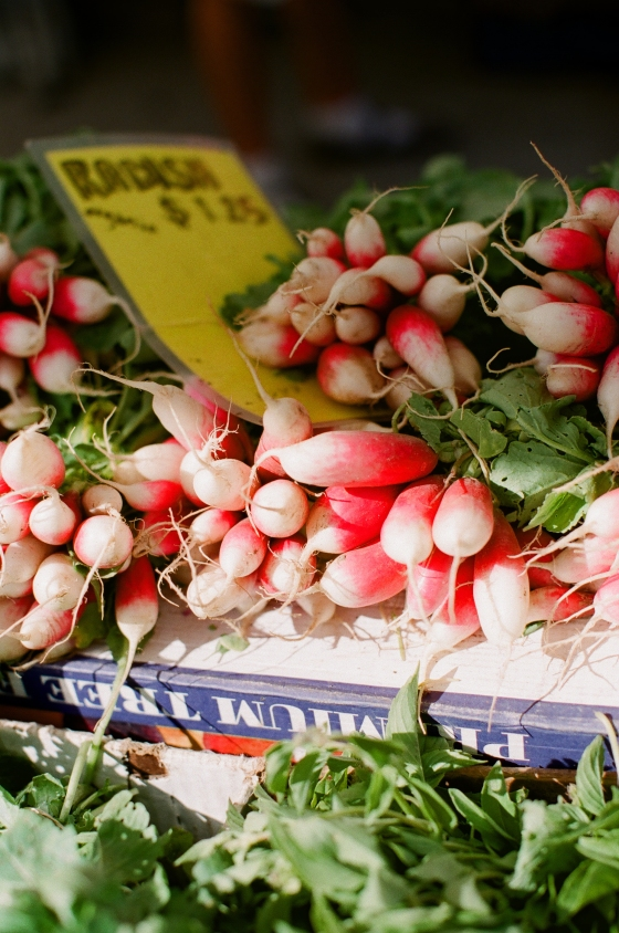 farmers_market_radishes