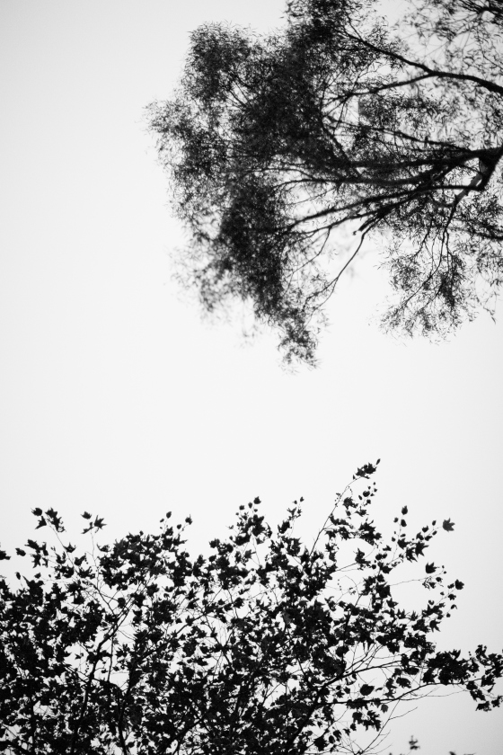 tree_branch_silouette
