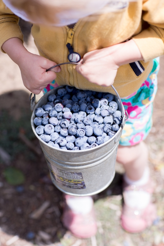 child_holding_blueberry_pail